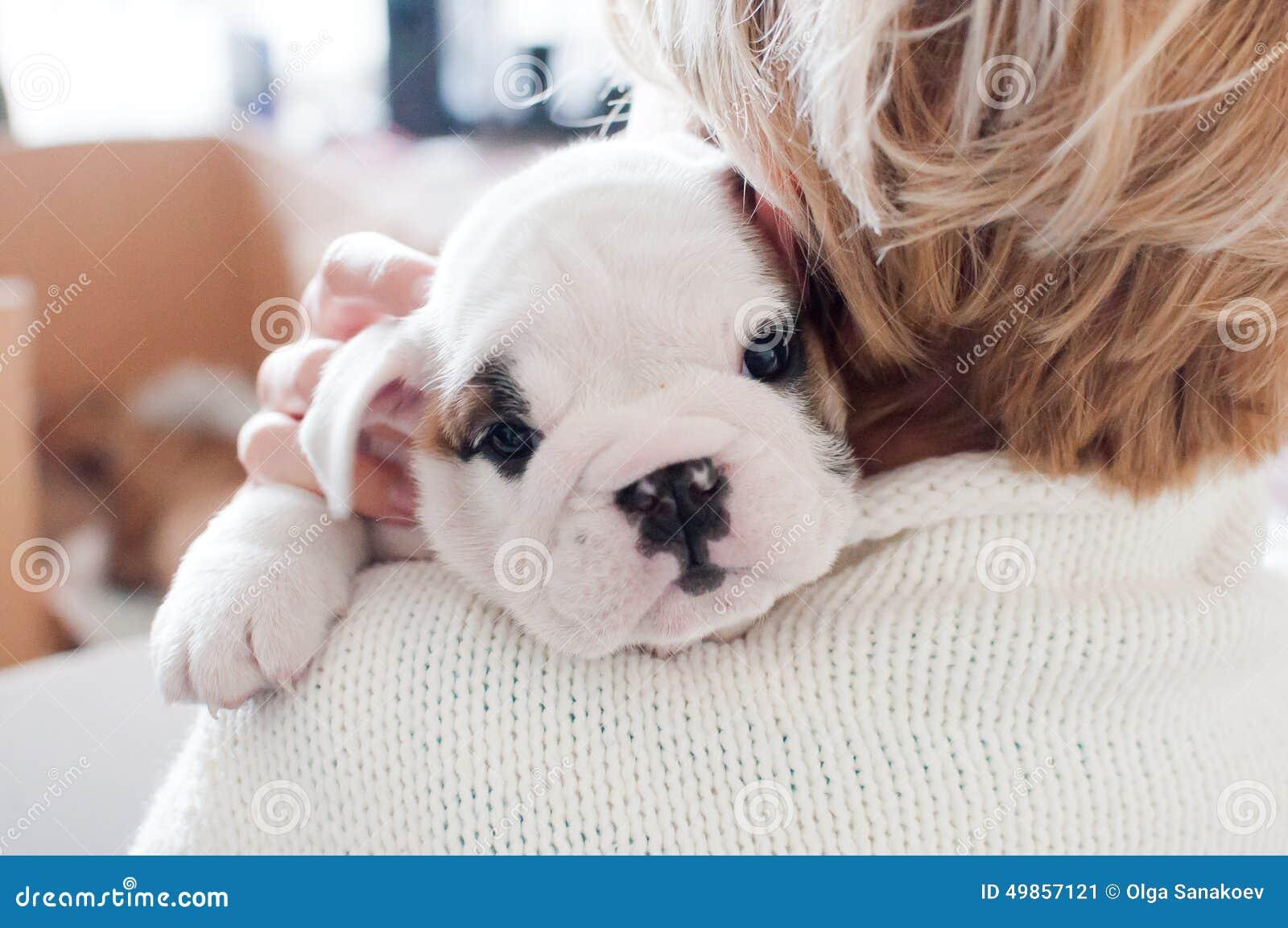 Woman Holding White English Bulldog Puppy Stock Image