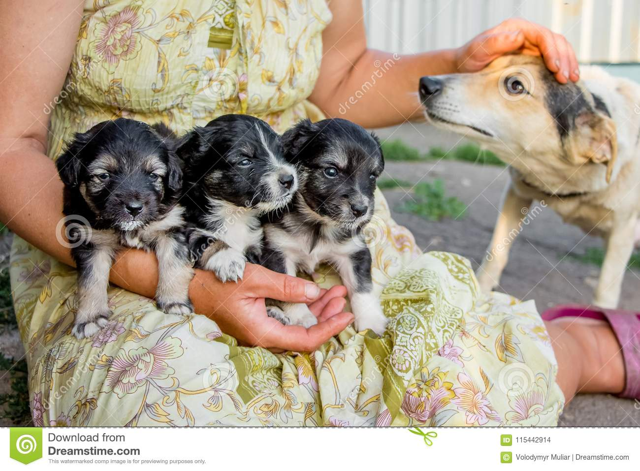 Woman holds three little puppys and caresses mom-dog with her h