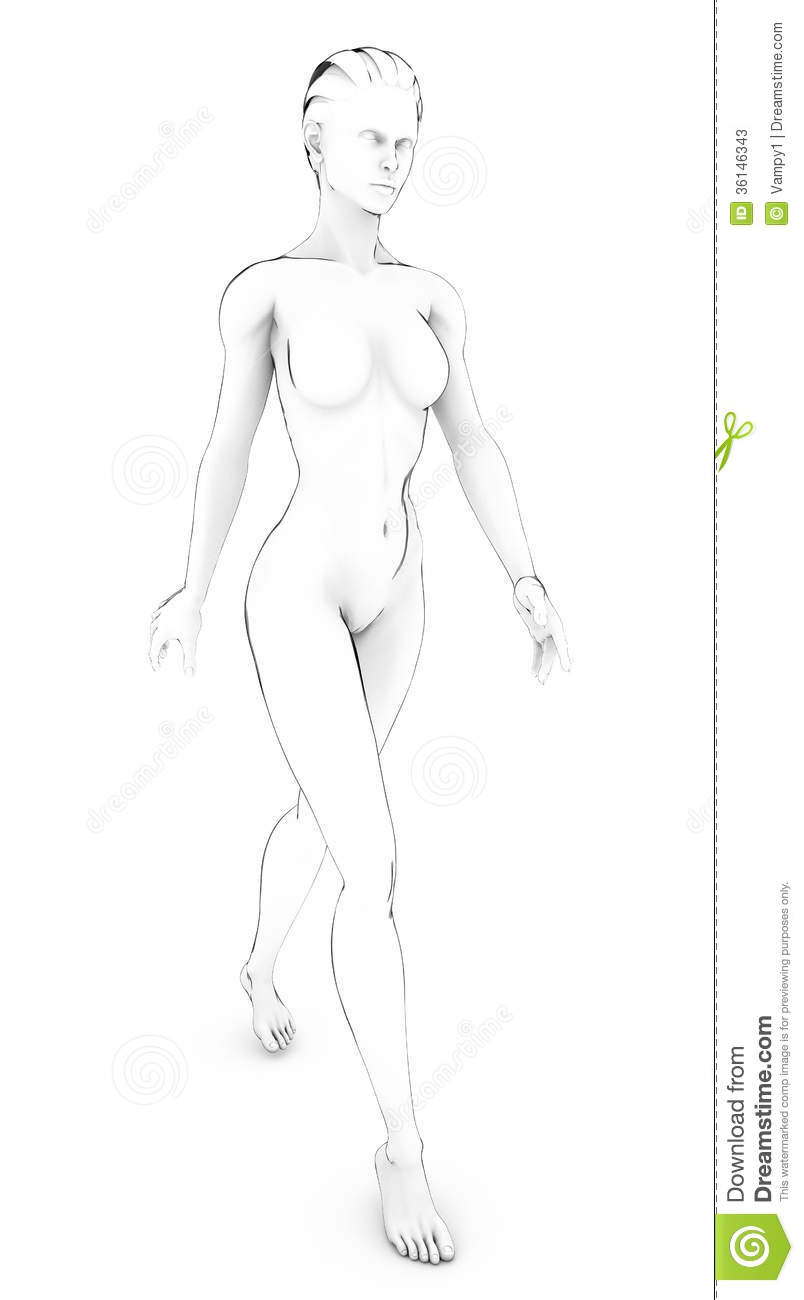 Woman Human Body Anatomy Body White Drawing Sketch Stock ...