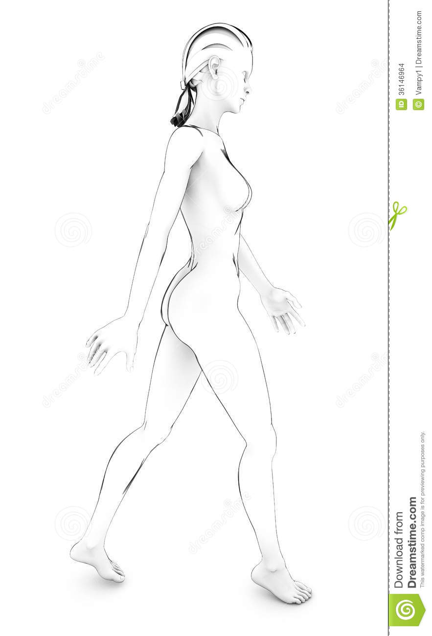 Woman Human Body Anatomy Body White Drawing Sketch Stock