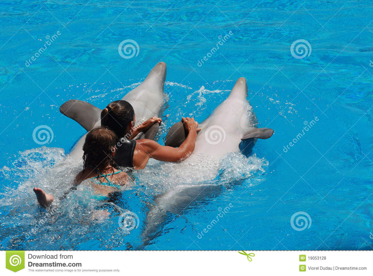 Woman And Kid Swimming With The Dolphins Editorial Stock
