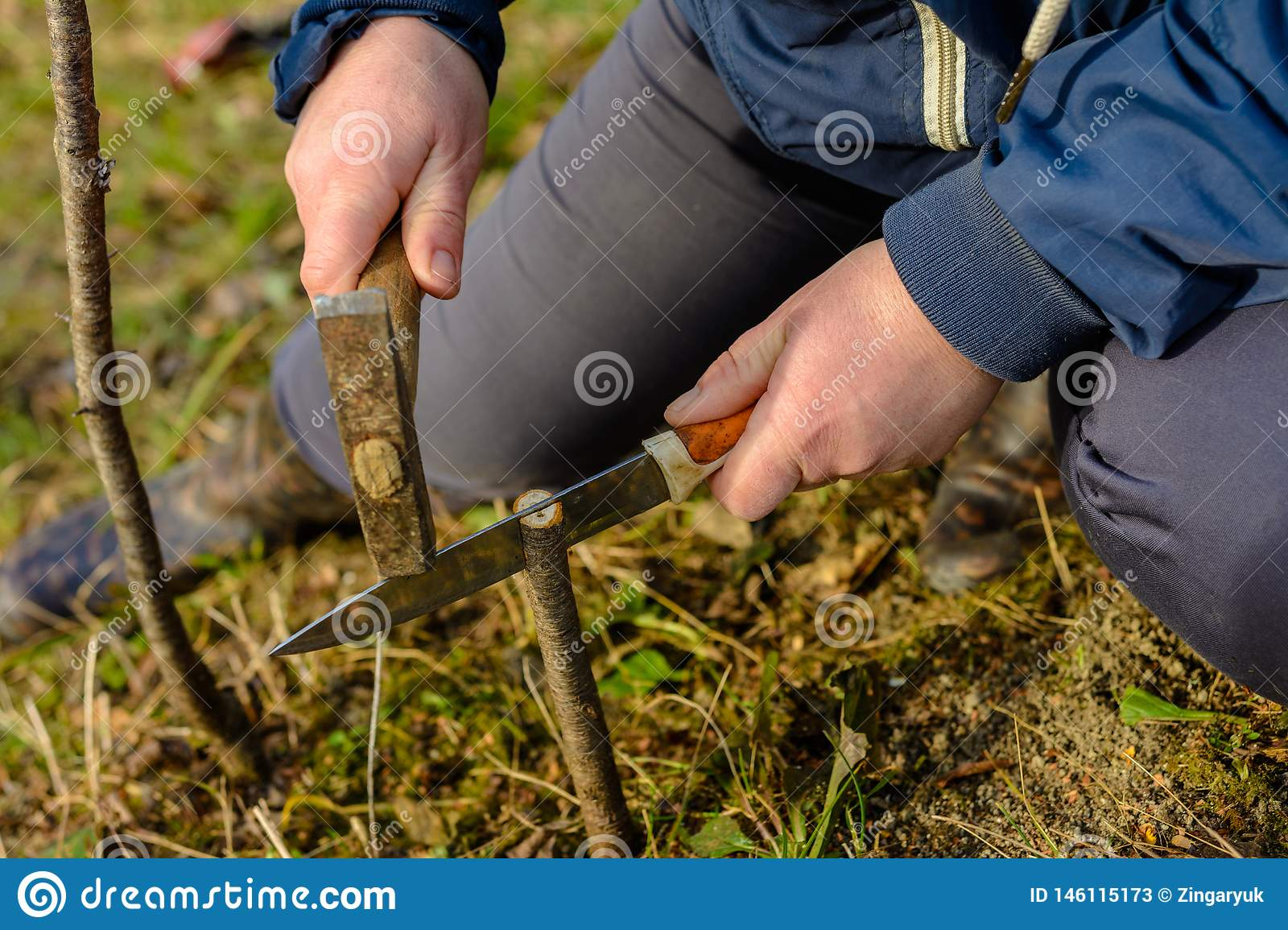 The woman makes a crack in the newly cut young tree for his vaccination with a knife and a hammer