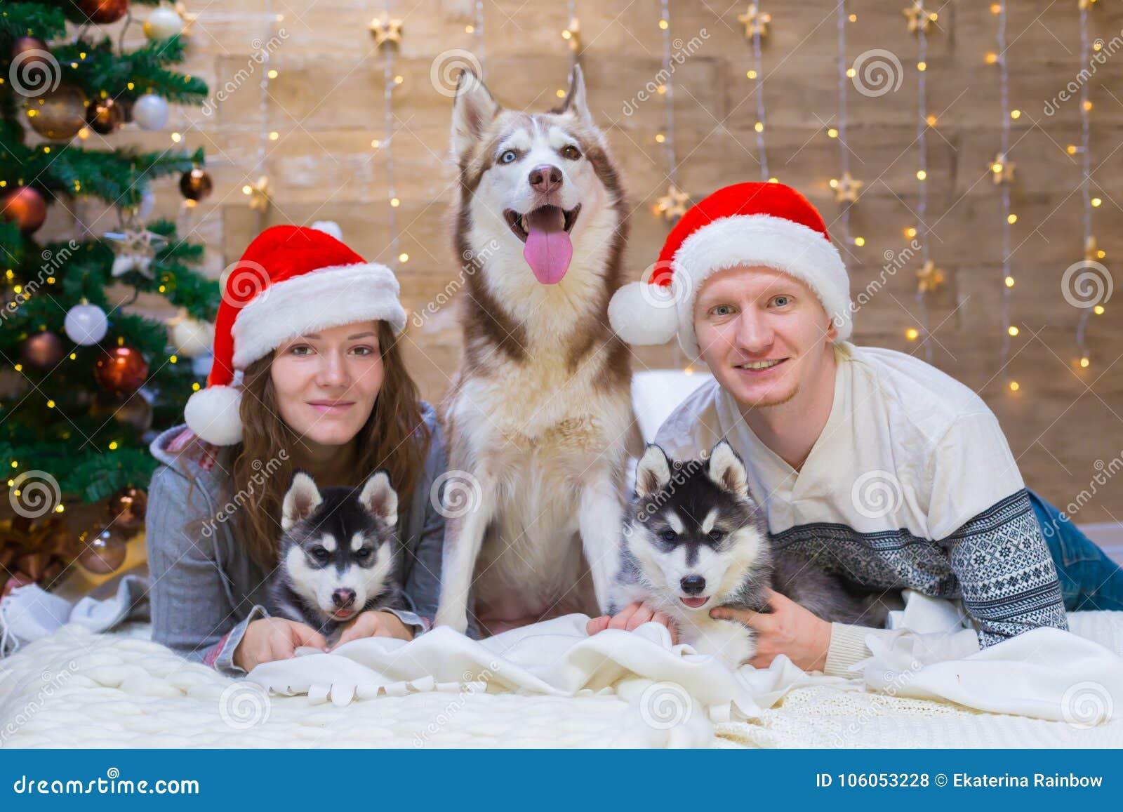 9017b511d0644 ... dog husky