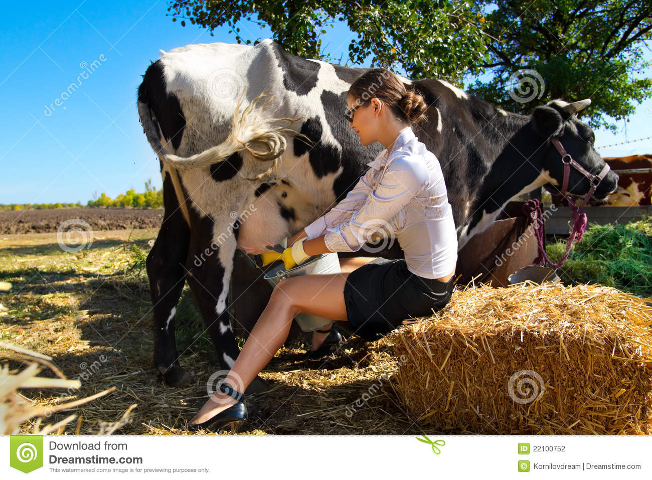 Woman milking cow stock photo. Image of agronomy, bovine ...