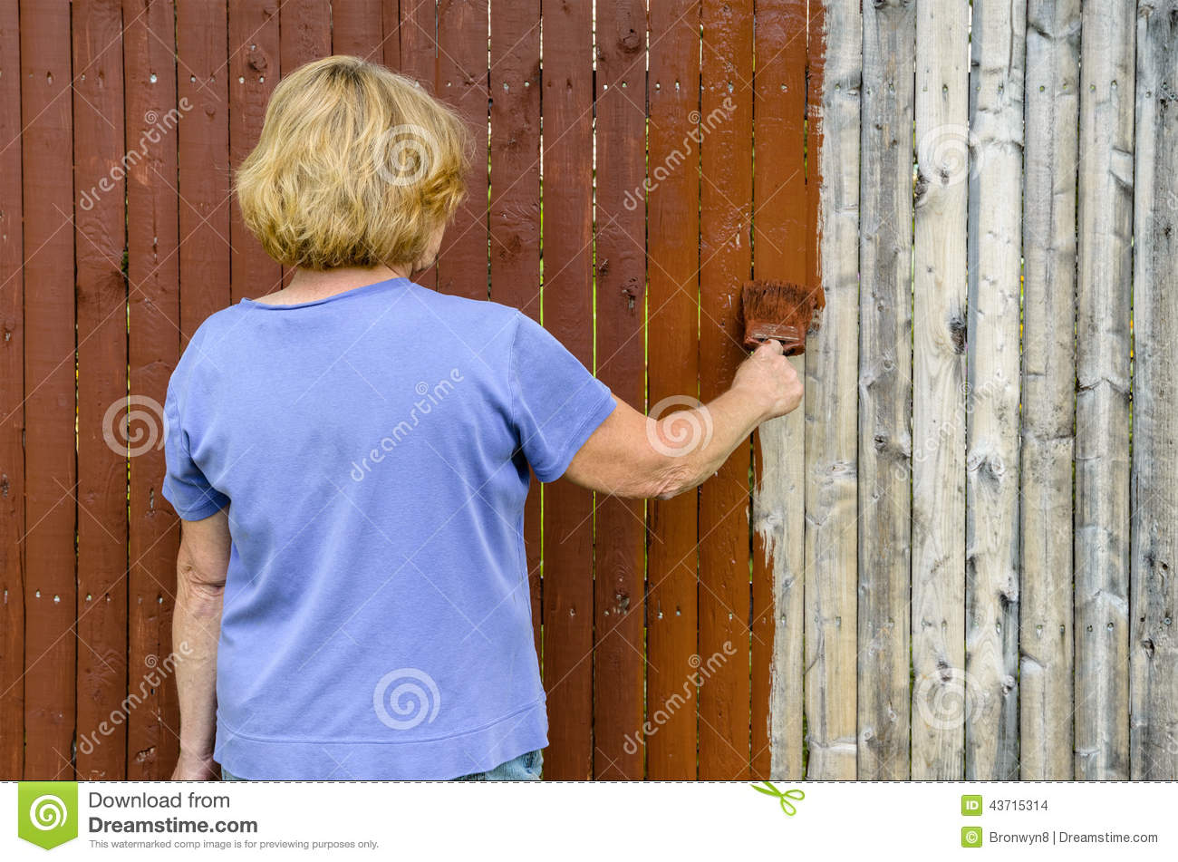 Woman painting fence stock photo image 43715314 cedar fence old painting stain baanklon Images
