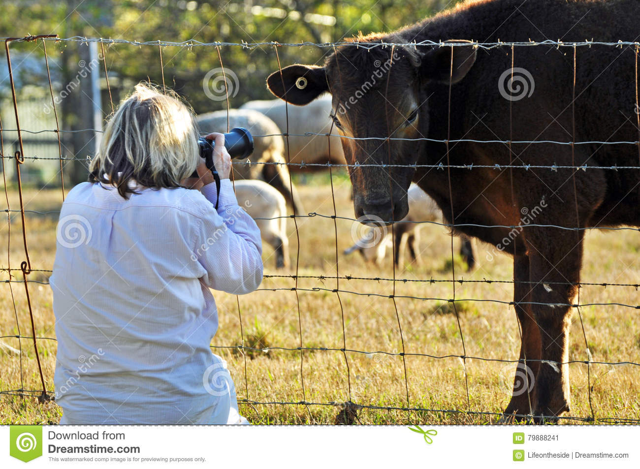 Woman pet photographer photographing variety farm animals