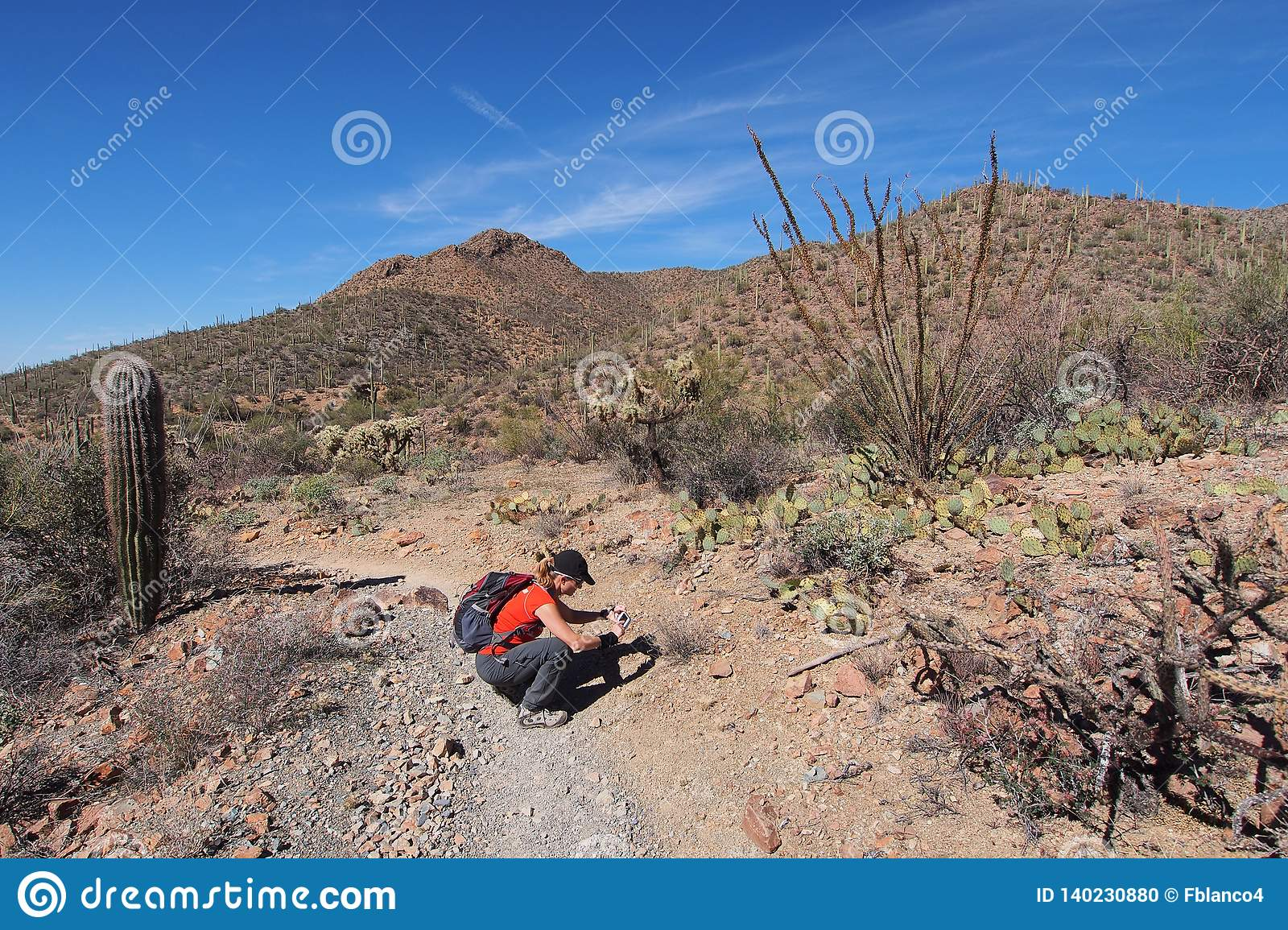 Woman photographing desert wildflowers in Saguaro National Park.
