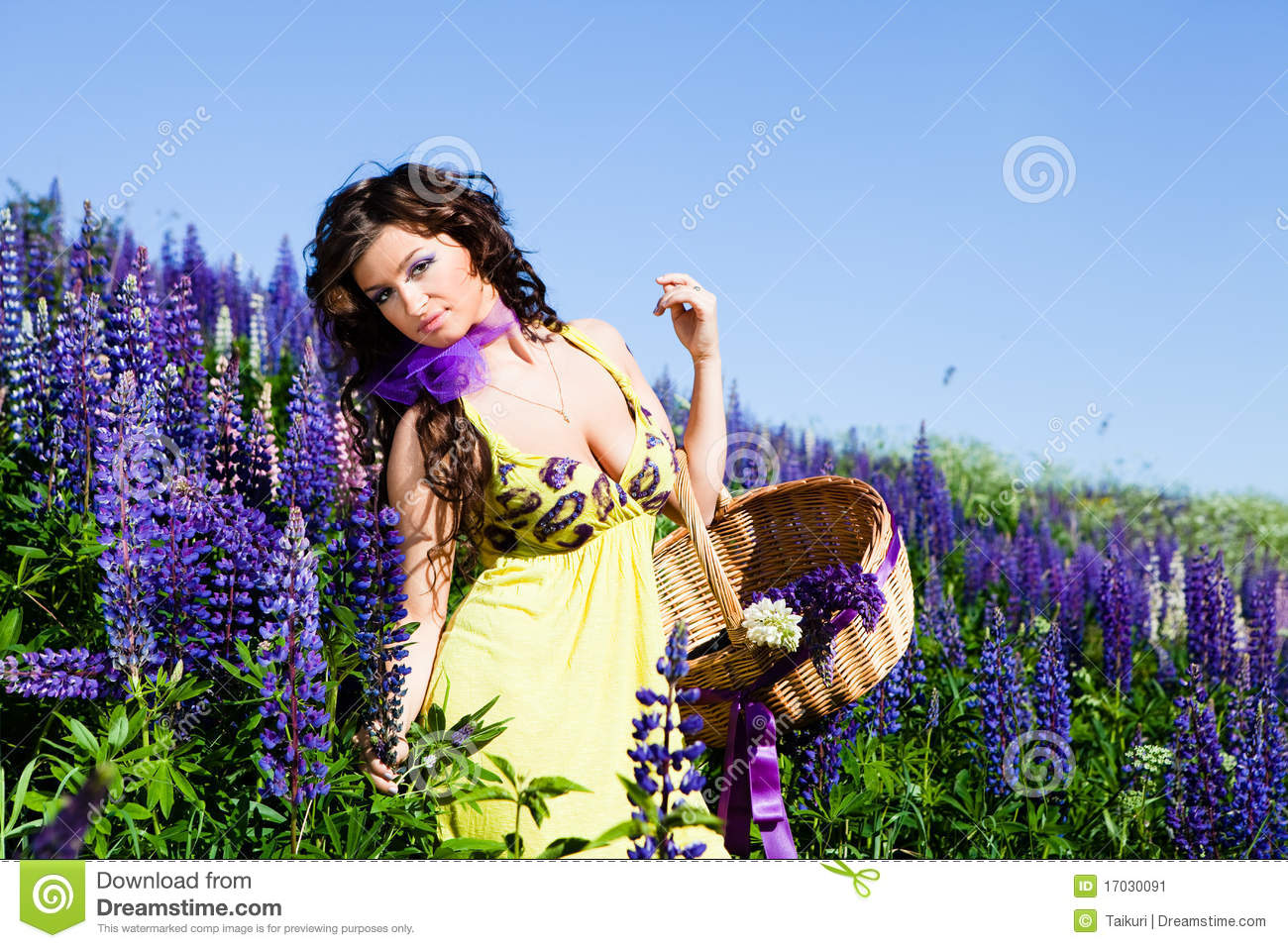 Woman In Plant Of Violet Wild Lupine Stock Image - Image ...