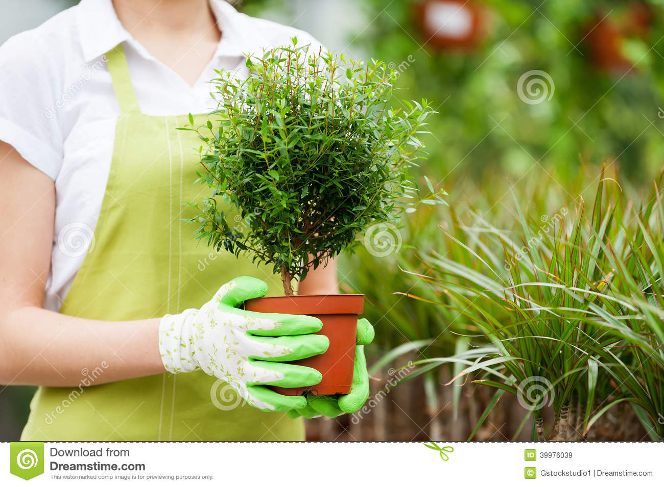 a woman is not a potted plant essay Download thesis statement on alice walkers a woman is not a potted plant in our database or order an original thesis paper that will be essay database not a.