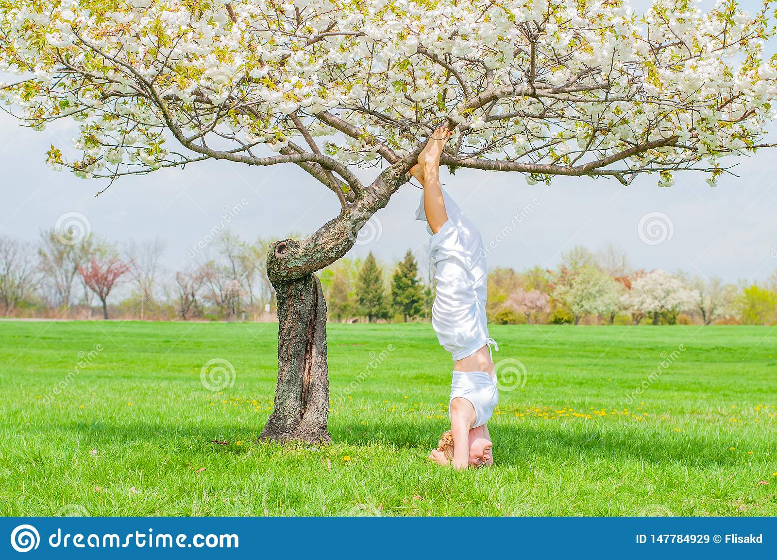Woman is practicing yoga, doing Salamba Sirsasana exercise, standing in headstand pose near tree