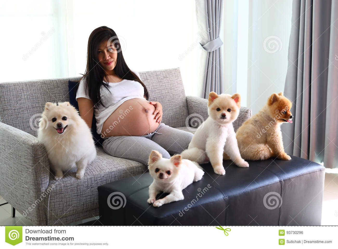 Woman Pregnant And Pomeranian Dog Cute Pets In Living Room ...