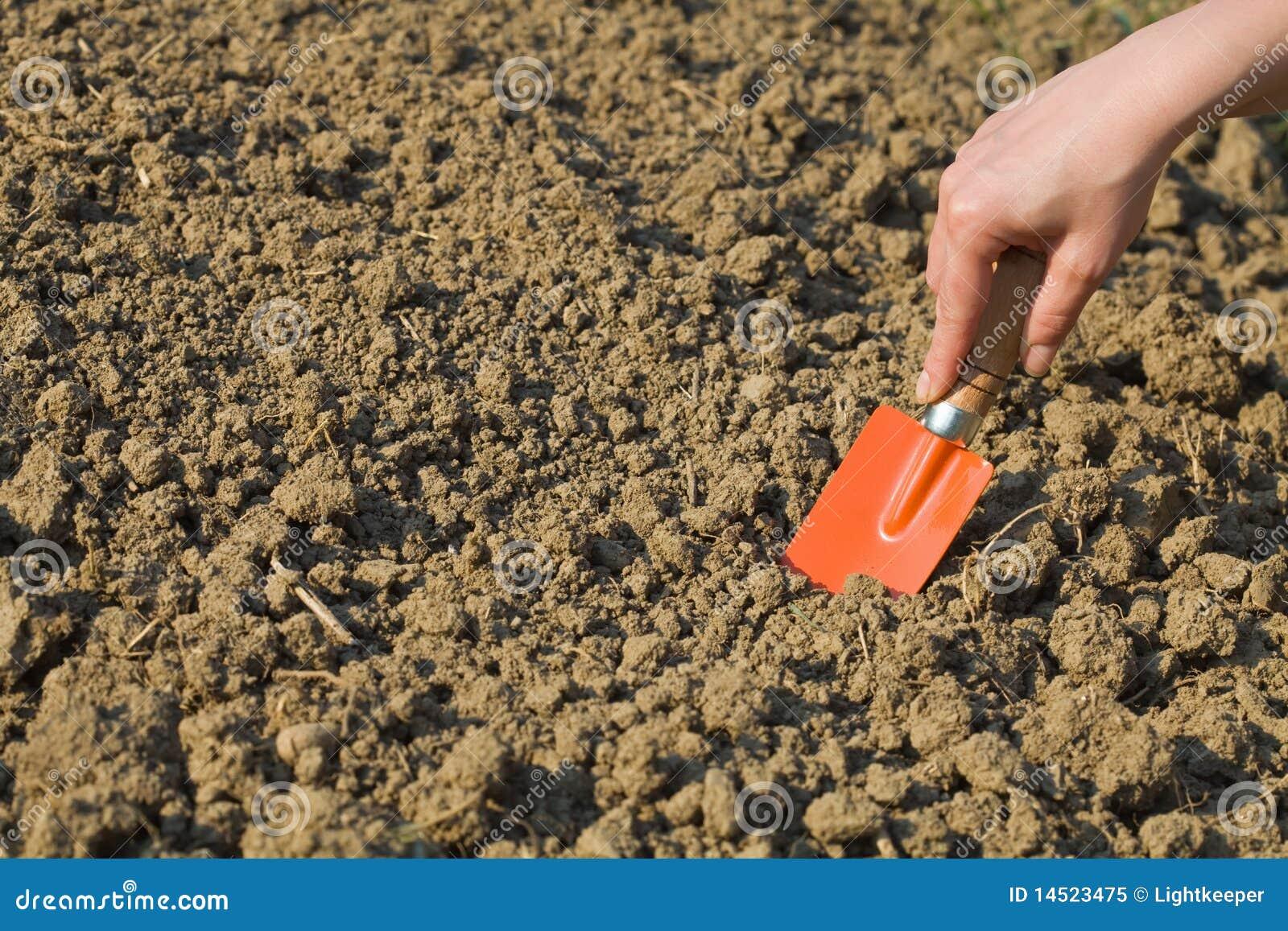 Woman preparing soil for spring gardening royalty free for Soil 7t7 woman