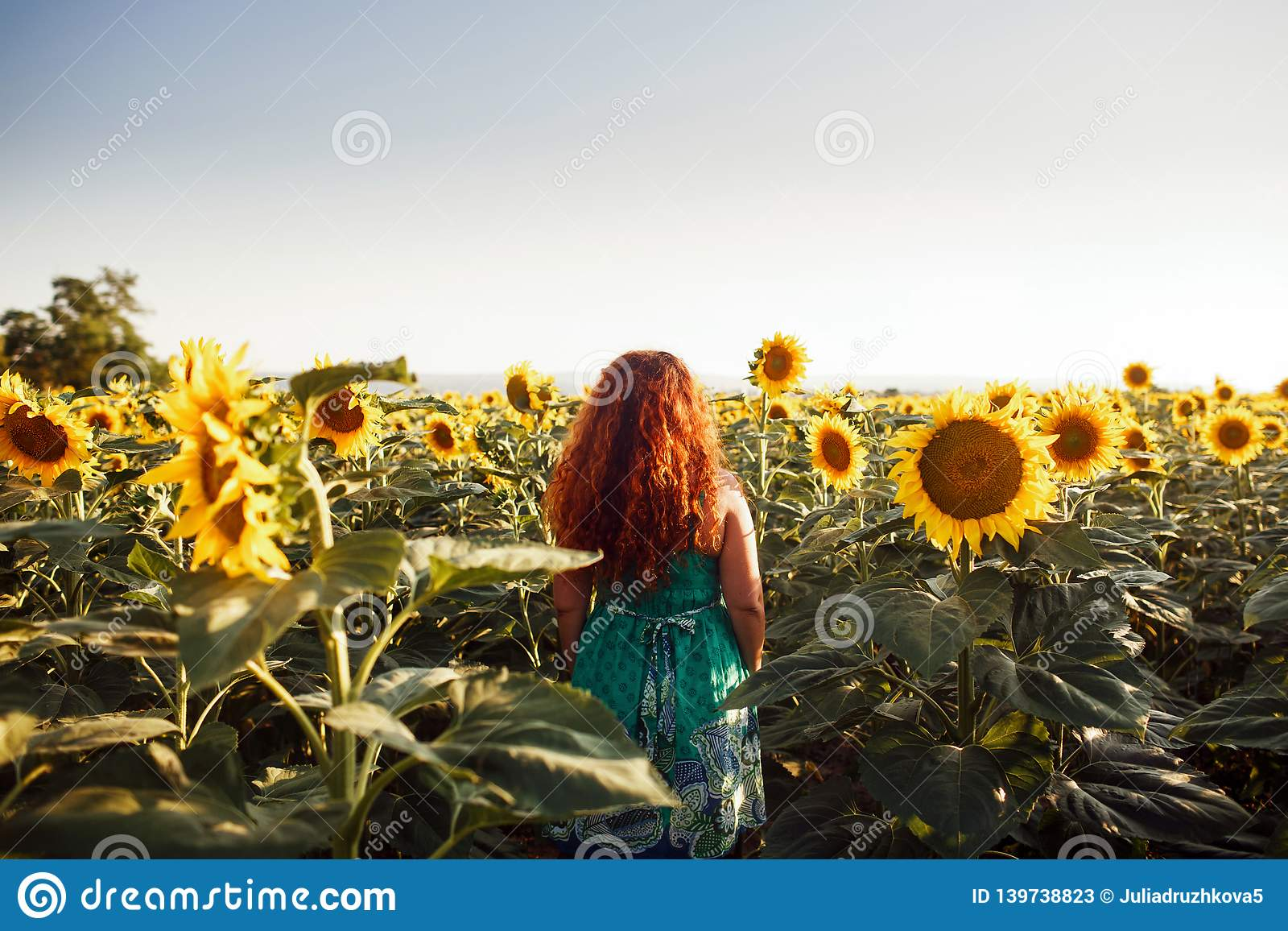Red-haired young woman walking away in a field of sunflowers, view from her back. Copy space