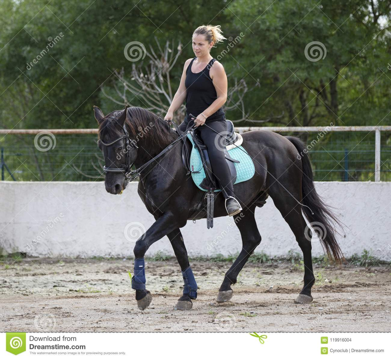 Woman Rider And Horse Stock Photo Image Of Dressage 119916004