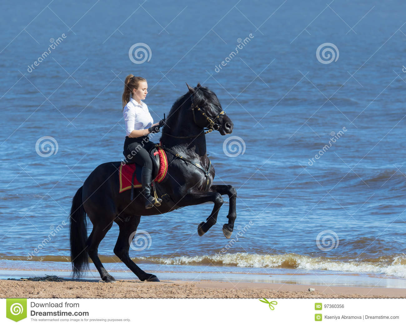 Woman riding horse on beach of sea. Stallion stands on hind legs