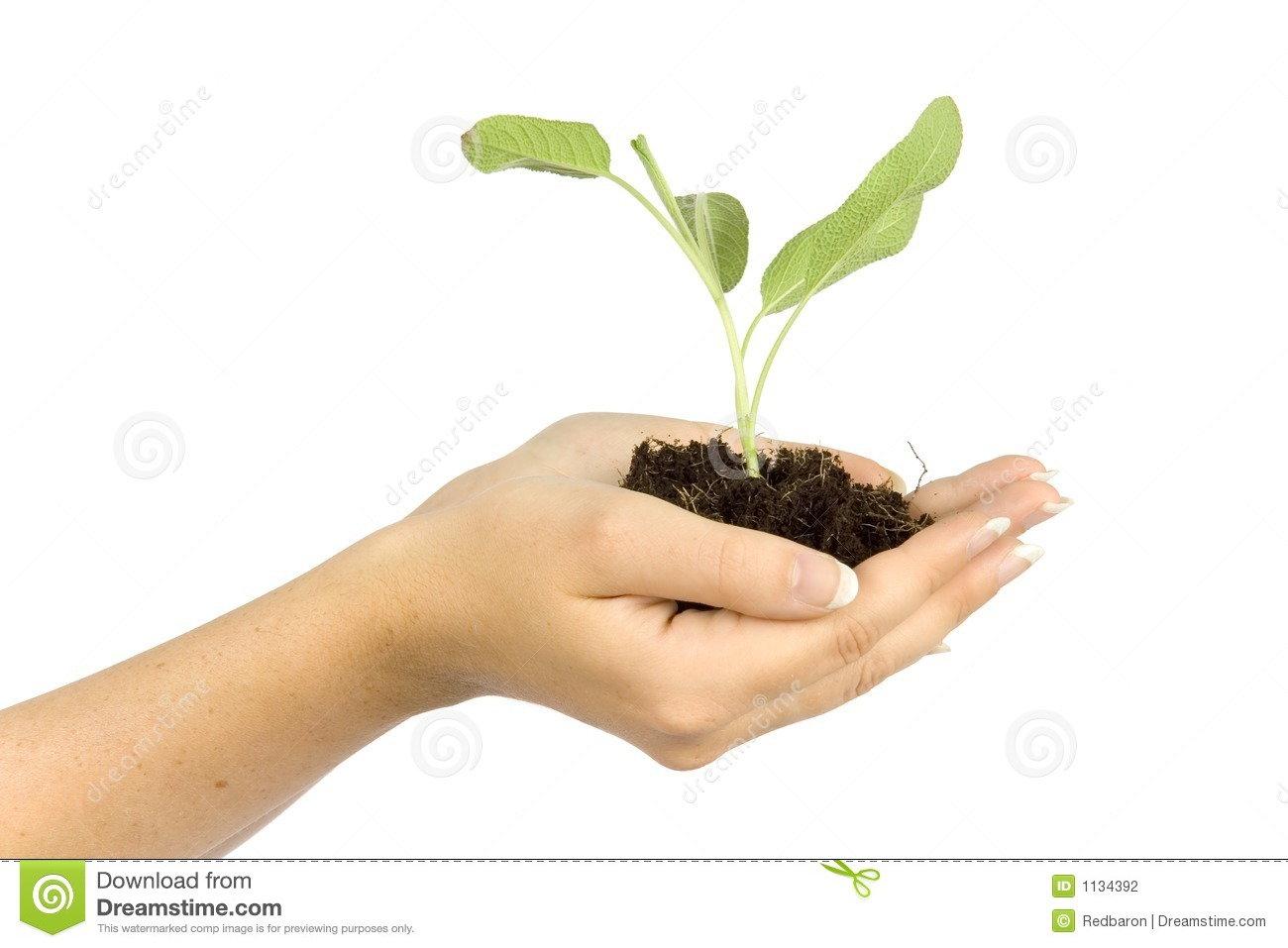 Woman s hands keep plant