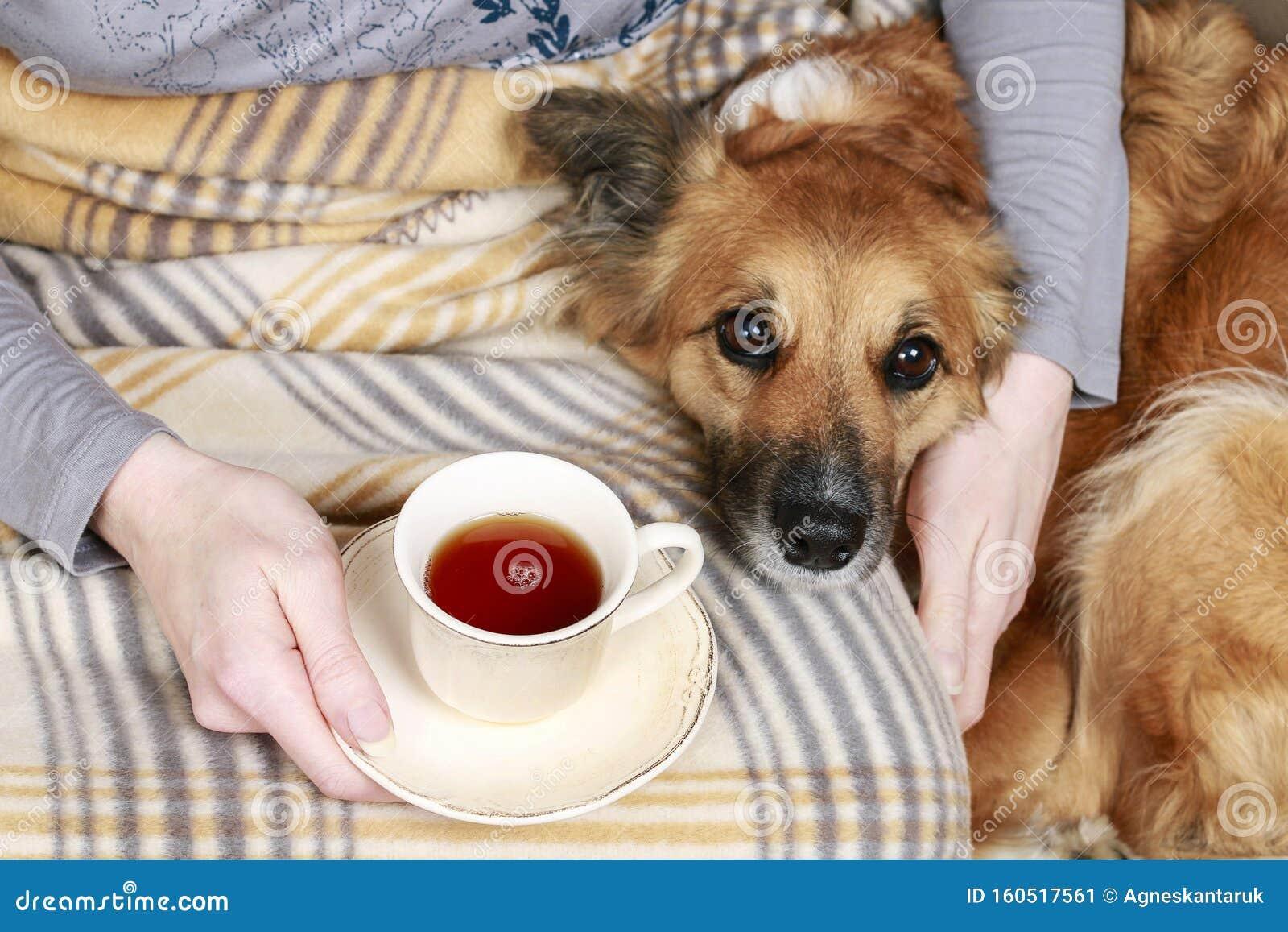 cup tea dog