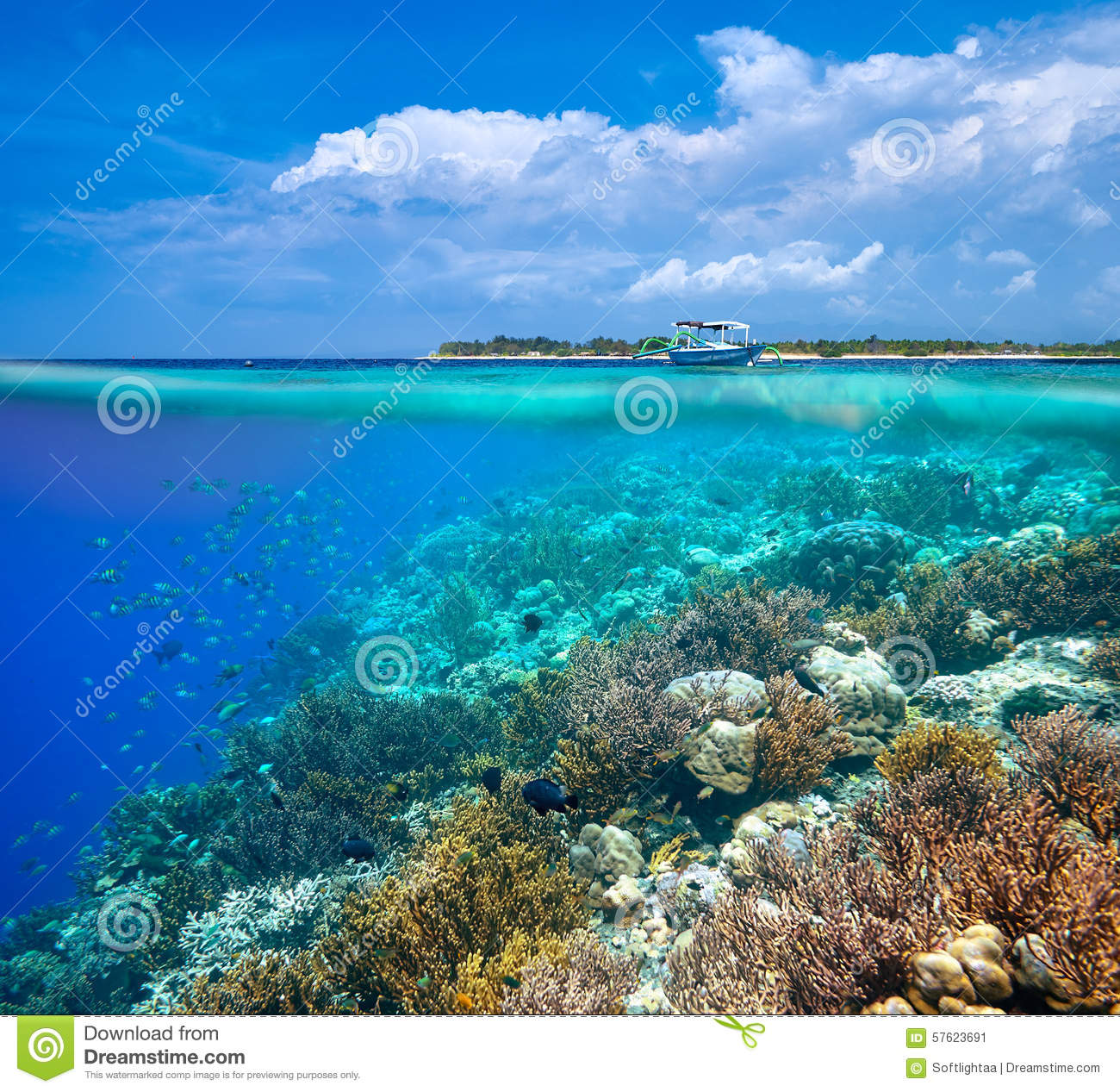 Coral Reef Background: A Woman Snorkeling Near The Beautiful Coral Reef With Lots