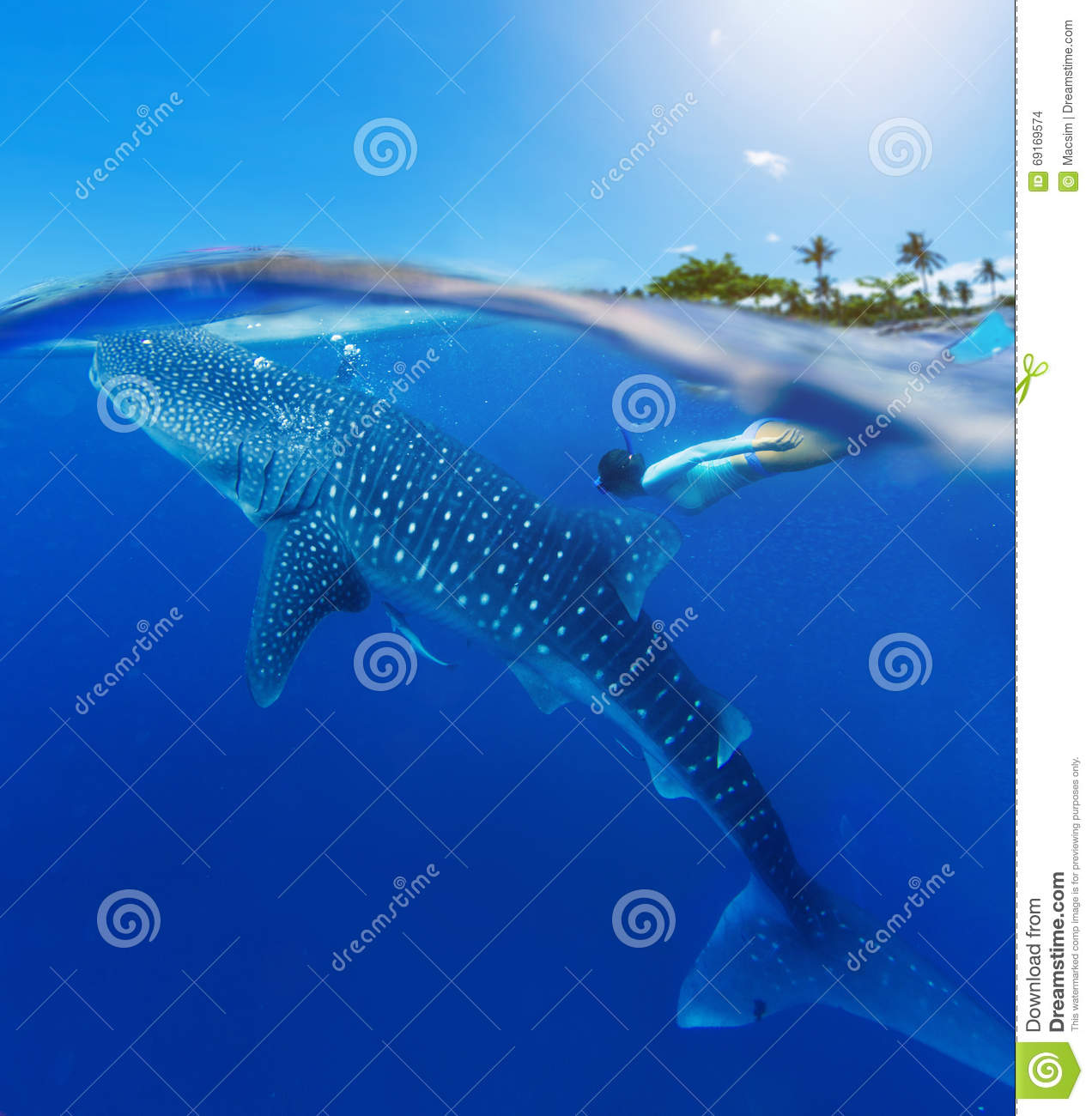 Woman snorkeling with whale shark