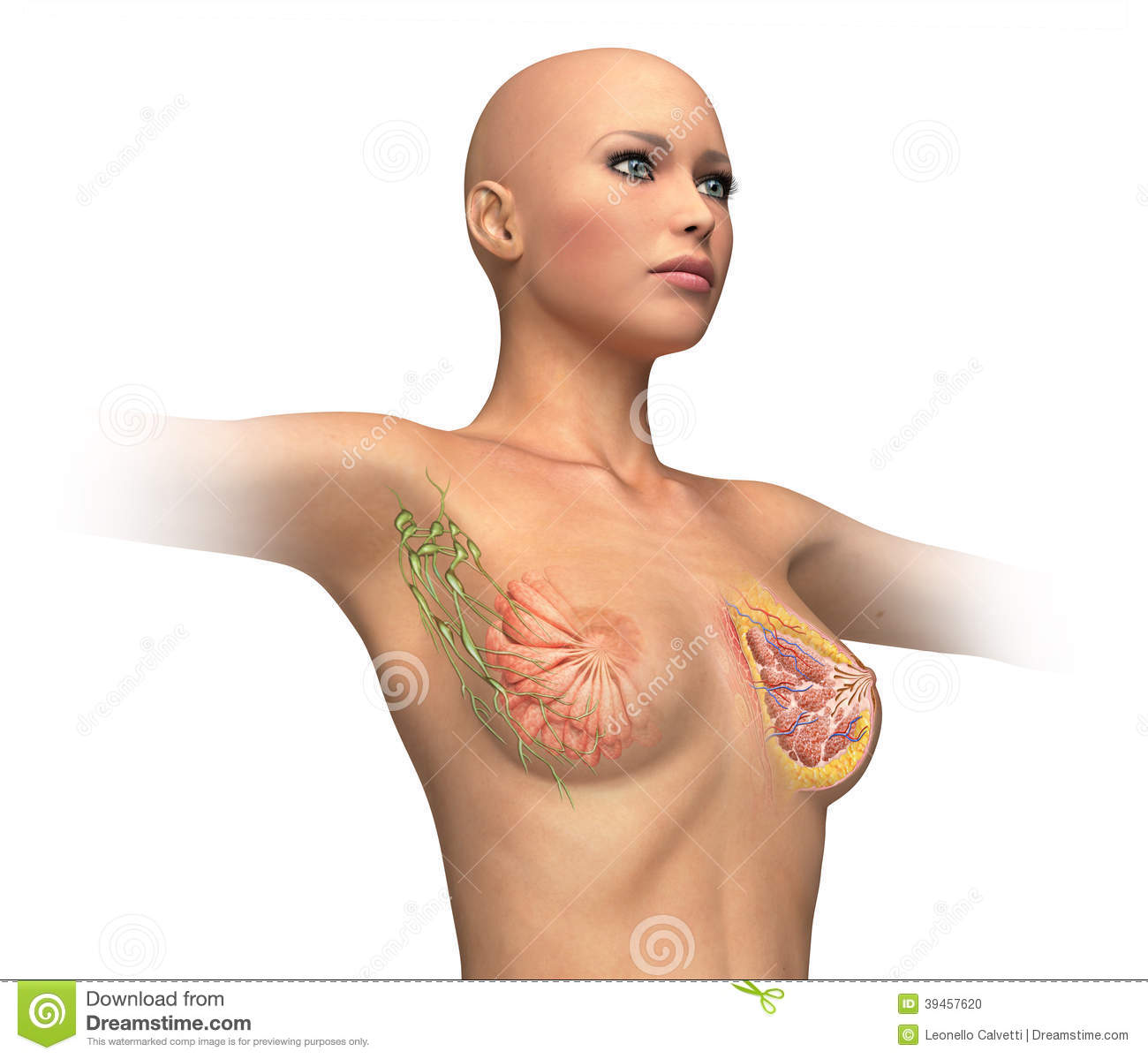 woman torse with breast cutaway cross section stock illustration