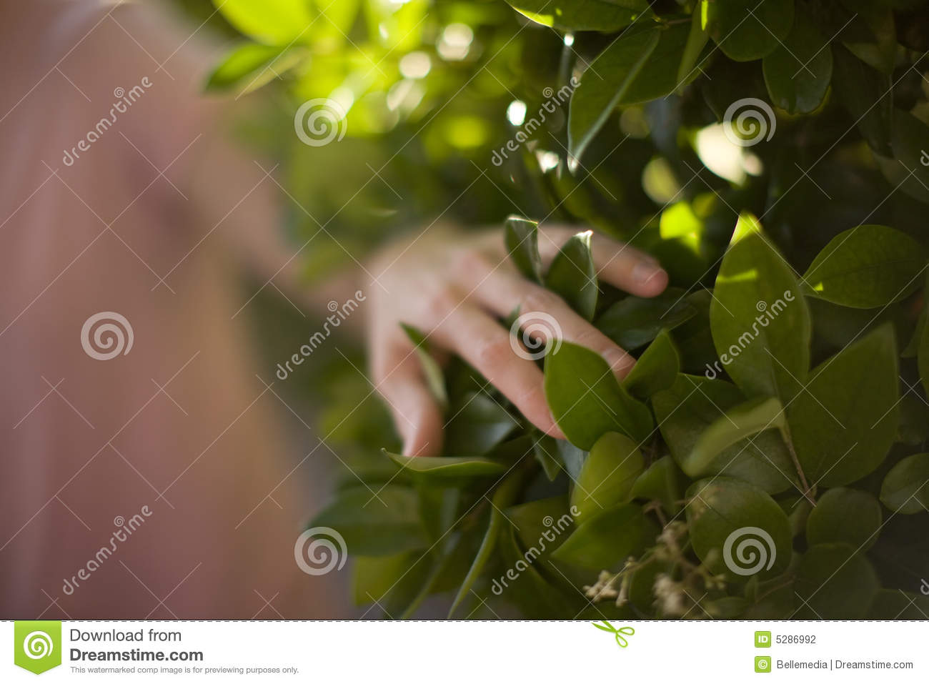 Download Woman touching plant stock photo. Image of pink, connect - 5286992