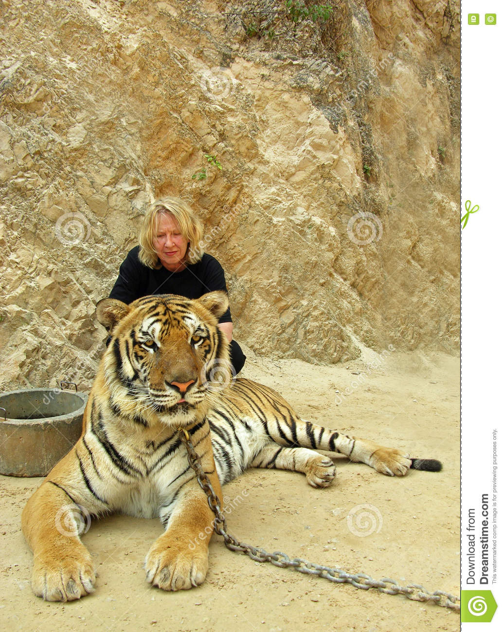 Download Woman Tourist Frowning In Concern For Cruel Conditions Of Chained Tiger Bangkok Tiger Temple In Thailand Stock Photo - Image of face, animal: 72951306