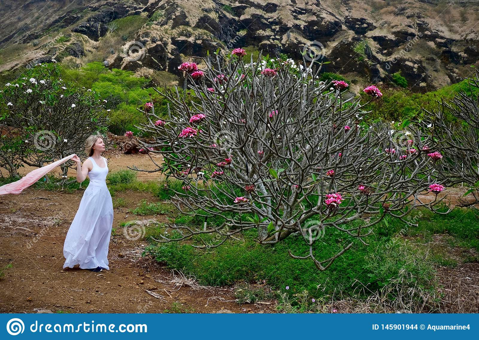 Woman on vacation looking at Plumeria tree with pink flowers.