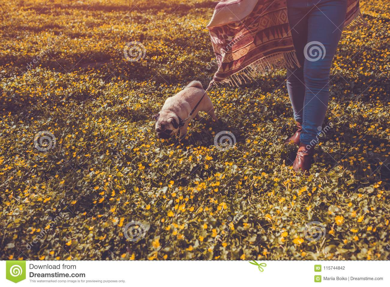 Woman Walking Pug Dog In Spring Forest  Happy Puppy Running Among