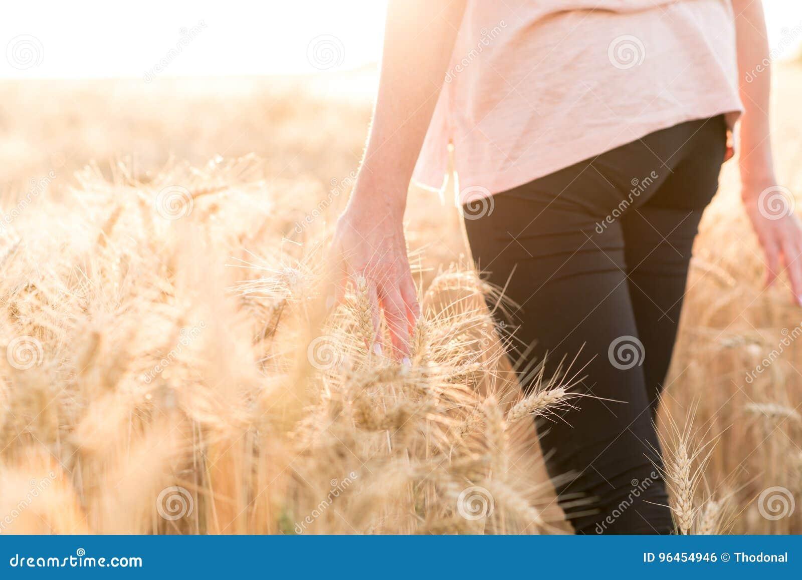 Woman walking and touching ears of wheat, sunlight effect