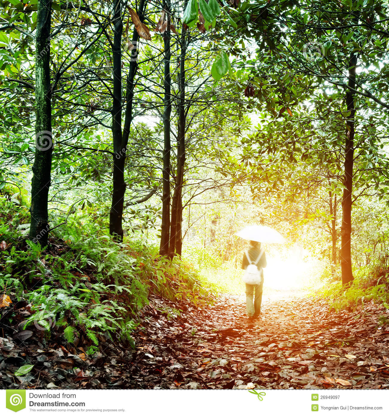 Woman Walking In The Woods Royalty Free Stock Photography - Image ...