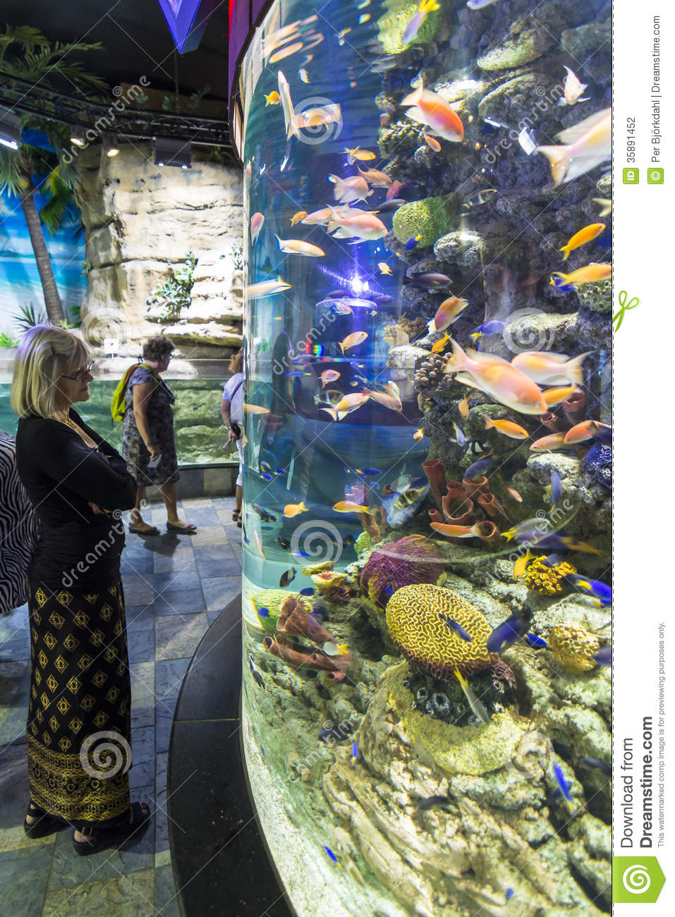 Freshwater Aquarium Fish In Dubai - Woman watching aquarium dubai editorial photography