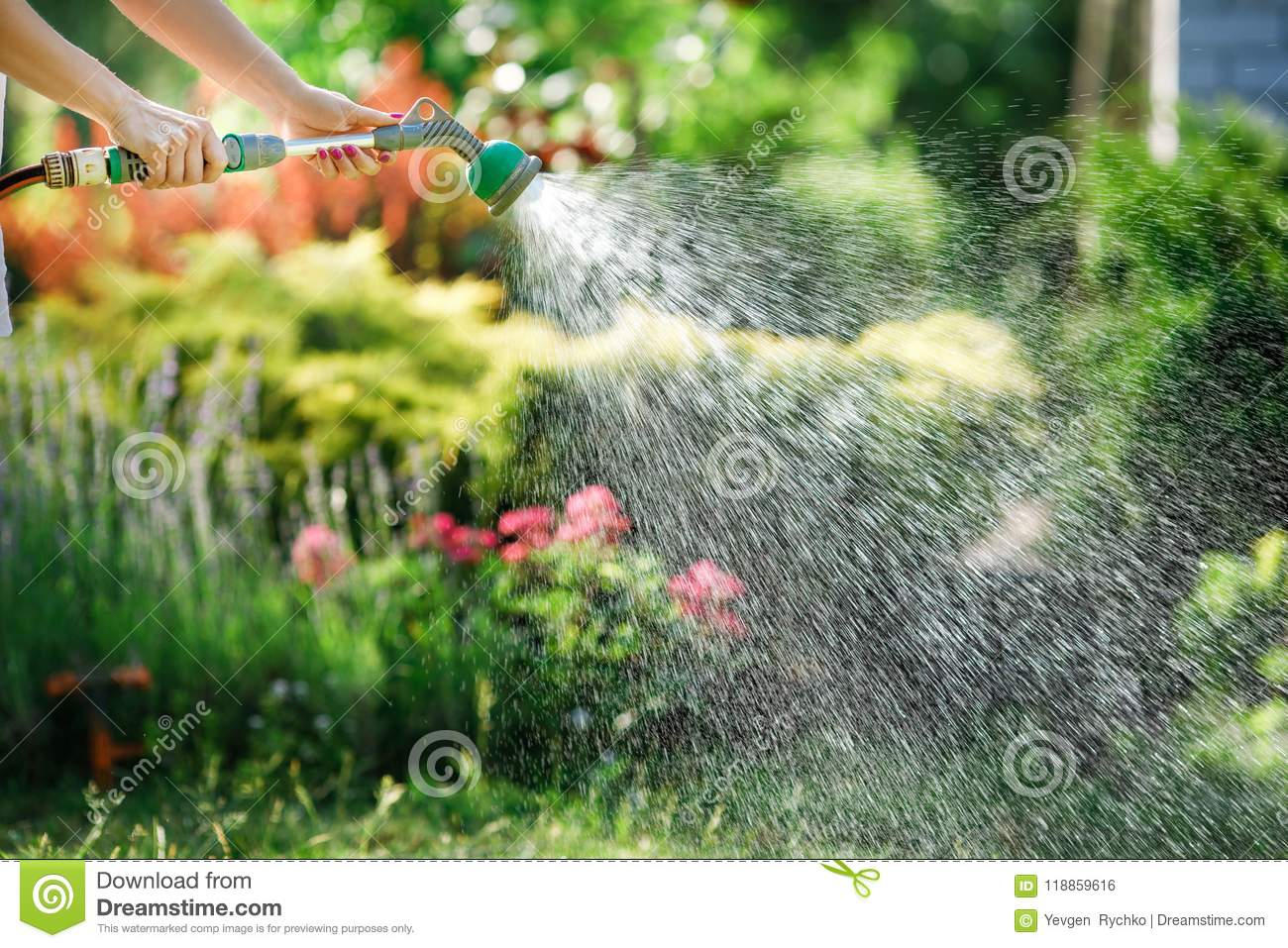 Watering garden flowers with hose