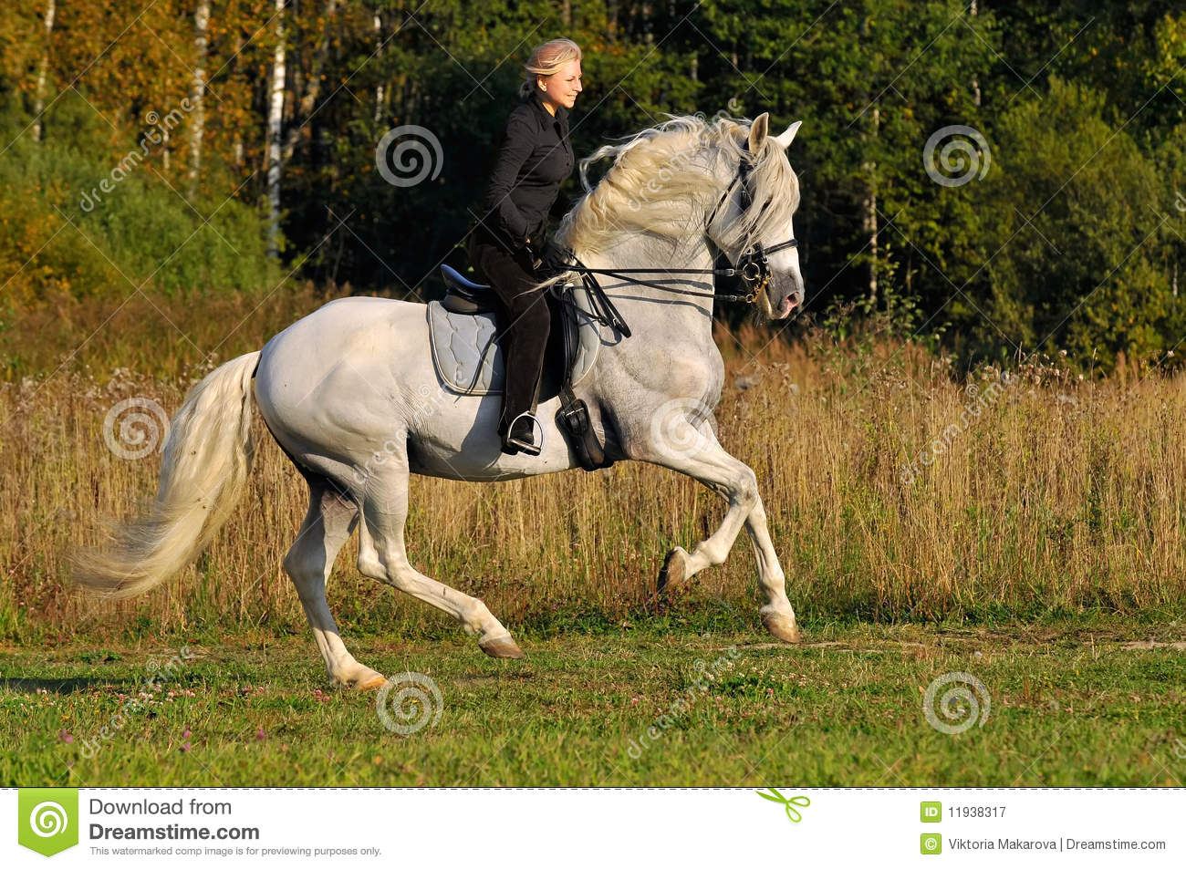Woman On White Horse Royalty Free Stock Photography
