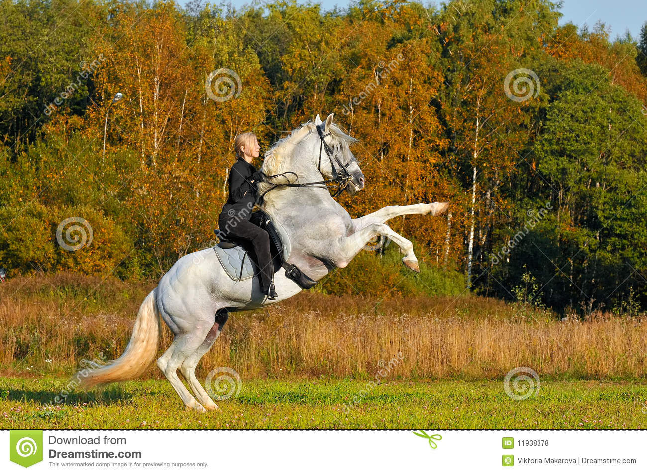 Woman on white horse in autumn
