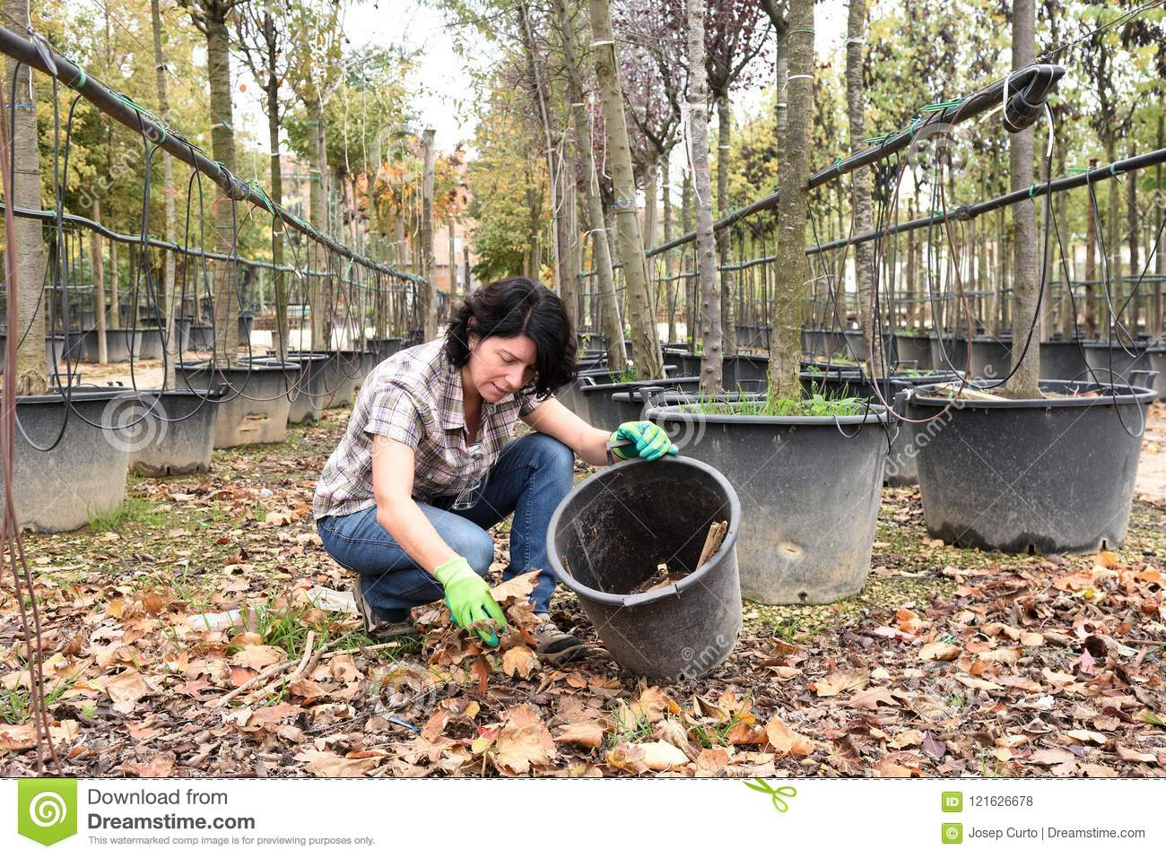 Woman working in the garden center, picking up dry leaves
