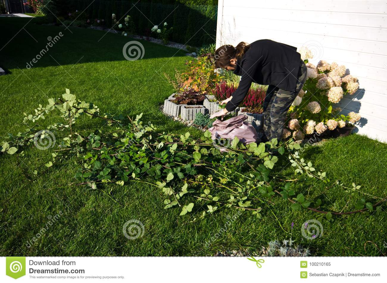 Woman working in a garden, cutting excess twigs of plants