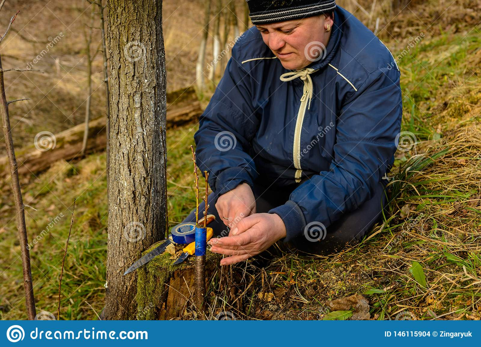 Woman wraps a graft tree with an insulating tape in the garden to detain the damp in it in close-up