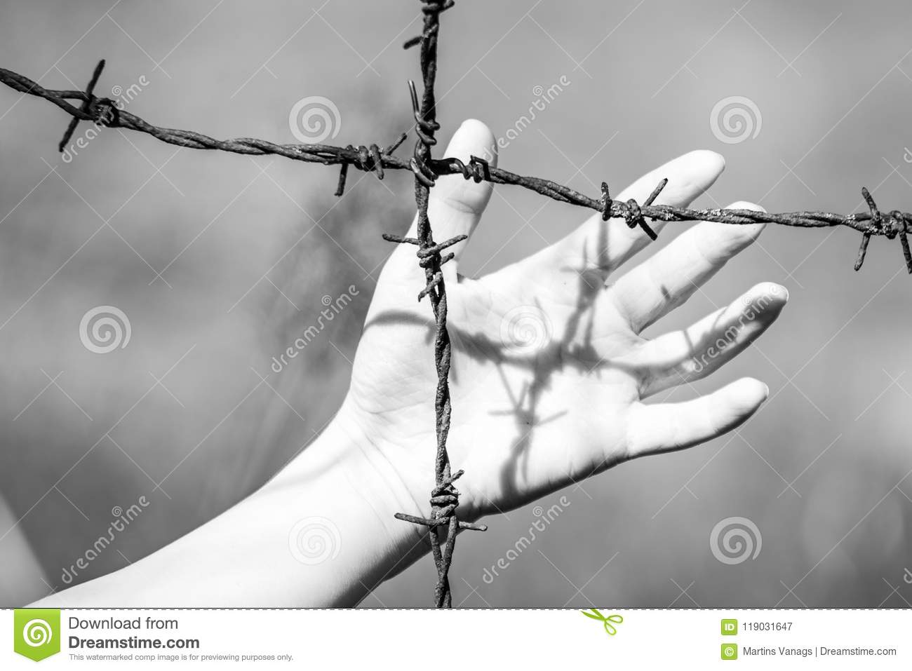 Hand Clutch At Barbed Wire Fence On Green Background Stock Image ...