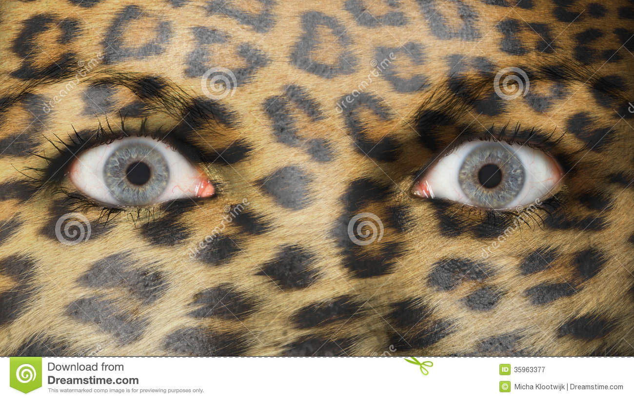 leopard eye close up - photo #23