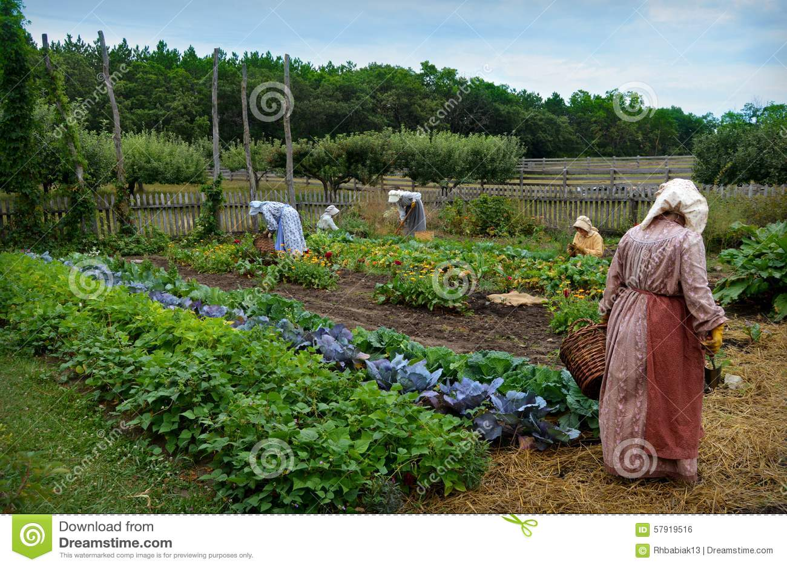 Backyard Vegetable Garden Business : Five pioneer women working in a vegetable garden at Old World