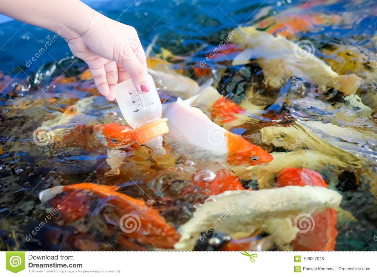 Women Hands Are Feeding Fish Stock Photo - Image of milk