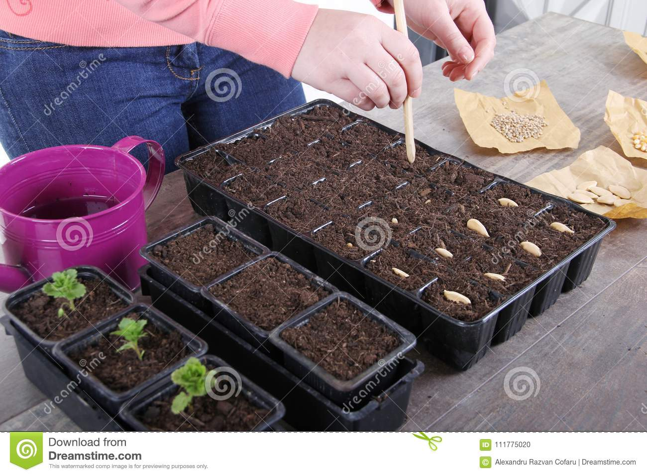 Women planting vegetable seeds close up