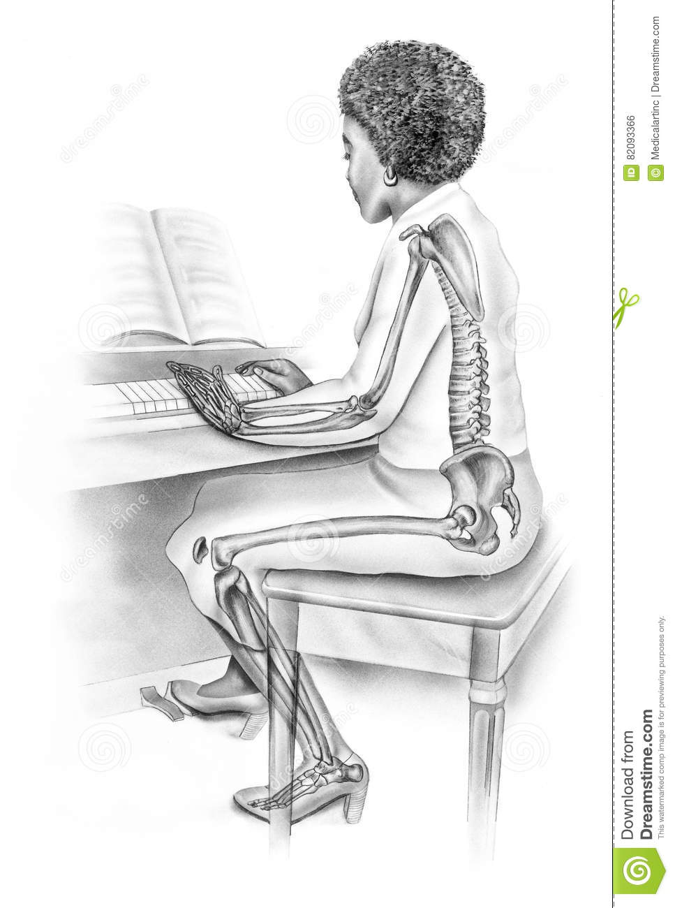 Womens Anatomy In Everyday Life Skeletal Structure Of Woman