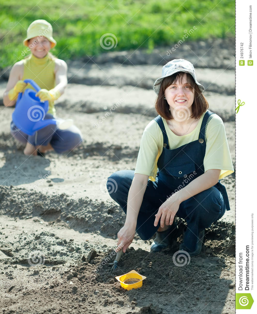 Women sows seeds in soil stock photography image 24976742 for Soil 7t7 woman