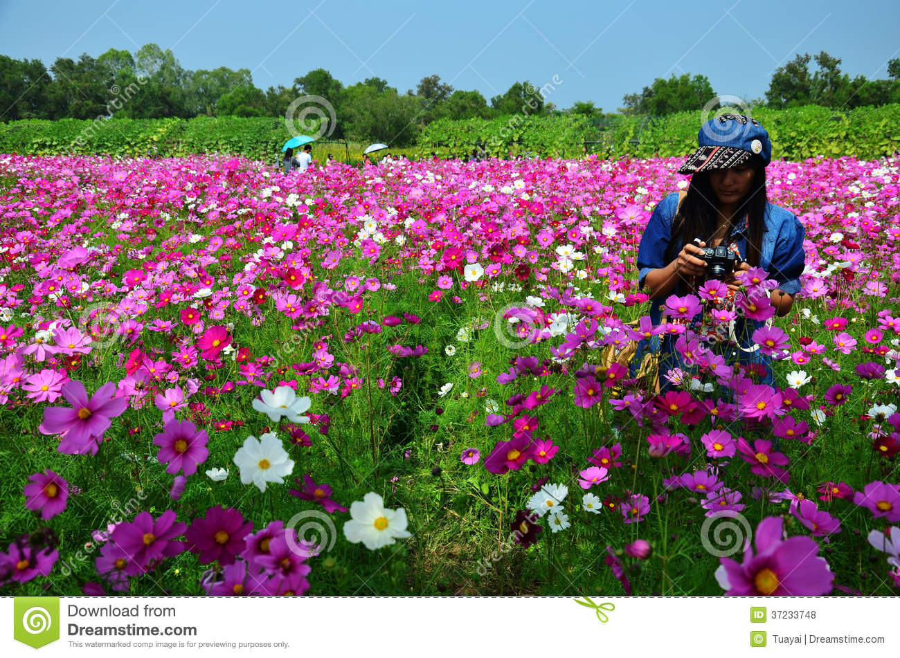 Women Thai Portrait On Cosmos Flowers Field At Countryside