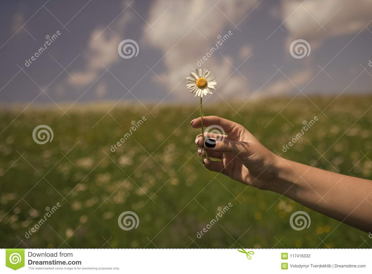 Womens day, mothers day, beauty. Summer, love, new life, skincare spa woman hold flower in blossoming field spring