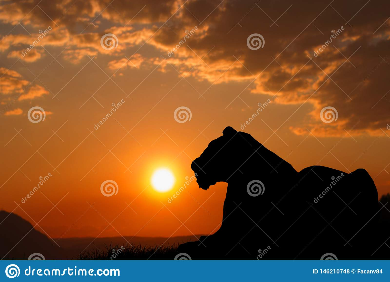 A big tiger silhouette. The tiger is resting and watching the environment. Beautiful sunset and orange sky in the background.