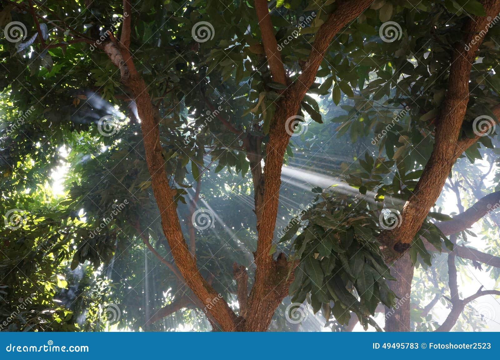 Wonderful Nature Scene In Chiangmai Stock Photo Image
