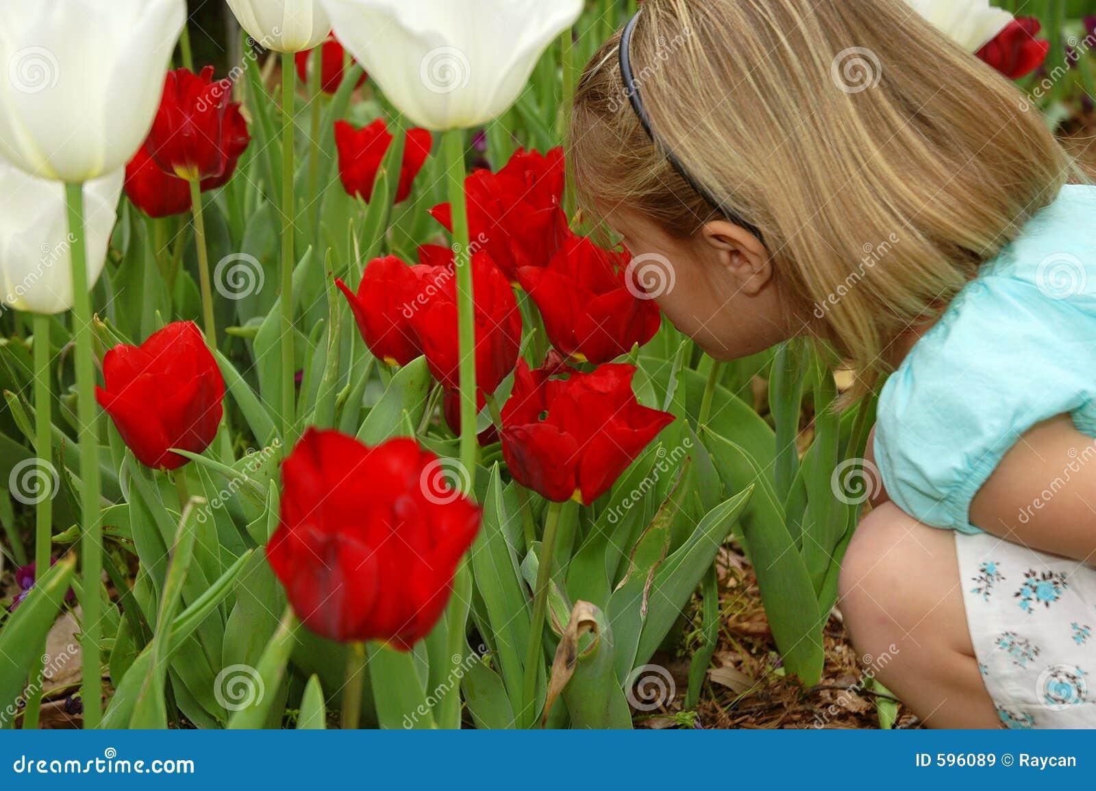 Wonderful Red Tulips