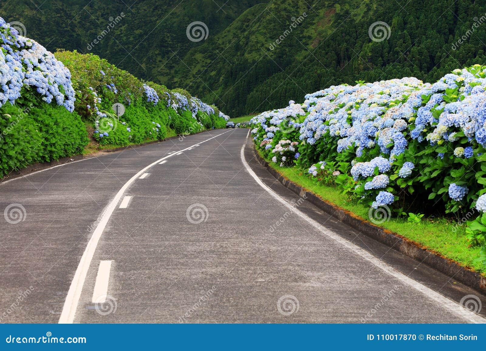 Wonderful road in Sao Miguel Island